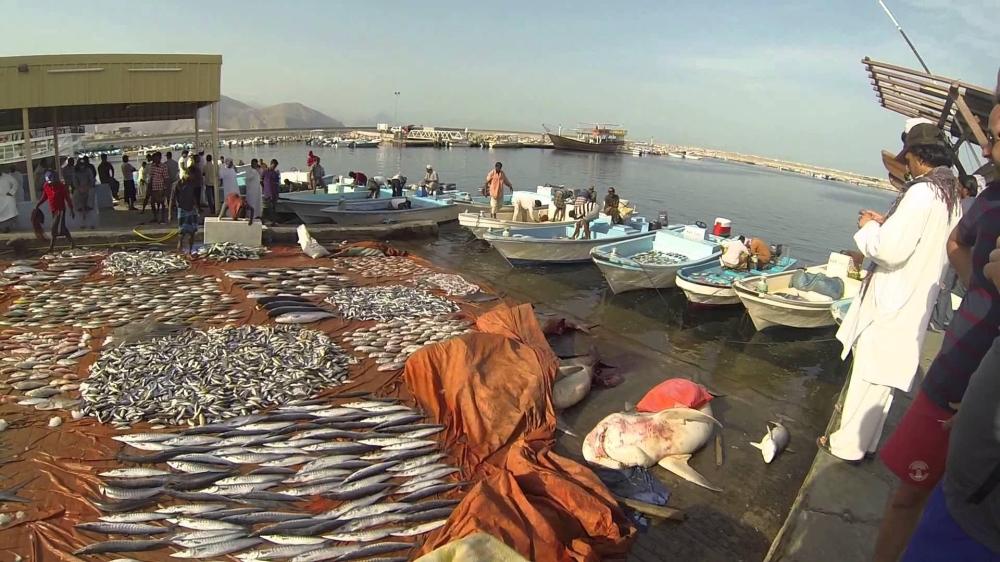 Marine Structures & Roads Construction Project - Duqm Fishery Port